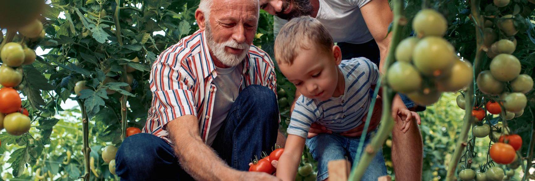 Online Mini MBA: Krmarjenje družinskih podjetij za uspeh več generacij